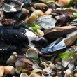 Seashells, mussels and seaweed background — Stock Photo