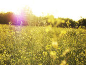 Field in sunshine and sunbeam — Stock Photo