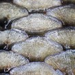 Stock Photo: Fish scales background