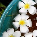 Plumeria in a celadon basin — Stock Photo