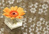 Orange gerbera flower in a vase — Stock Photo