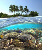 Tropical Reef - Maldives — Stock Photo