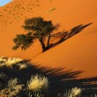 Sand Dune - Sossusvlei - Namibia — Stock Photo
