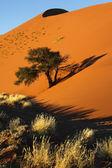 Sand dune - sossusvlei - namibië — Stockfoto