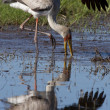 Yellowbilled Stork - Okavango Delta — Stock Photo