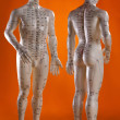 Alternative Medicine - Acupuncture Model - ストック写真