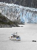 Aljaška - margerie ledovec — Stock fotografie