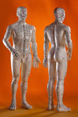 Alternative Medicine - Acupuncture Model — ストック写真