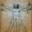 Vitruvian Man - Leonardo da Vinci - Stock Photo
