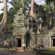 Ta Prohm - Angkor Wat - Cambodia — Stock Photo
