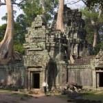 Ta Prohm - Angkor Wat - Cambodia — Stock Photo #16902481