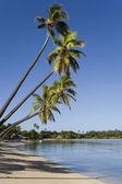 Fiji - pacífico sur — Foto de Stock