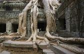 Ta prohm templo - angkor wat - camboya — Foto de Stock