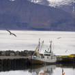 Port of Husavik - Iceland — Stock Photo