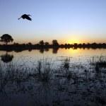 Постер, плакат: Okavango Delta Botswana