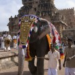 Temple Elephant - Thanjavur - India — Stock Photo