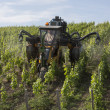 Stock Photo: Spraying vineyard with insecticide