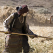 Harvest Time - Tibet — Stock Photo