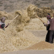 Stock Photo: Harvest Time - Tibet