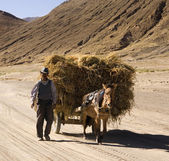 Peasent farmer - Tibet — Stock Photo