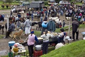 Otavalo Livestock Market - Ecuador - South America — Stock Photo
