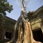 Ta Prohm Temple - Angkor Wat - Cambodia — Stock Photo #17413205