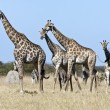 Giraffe - Botswana — Stock Photo #17417067