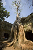 Ta prohm tempel - angkor wat - cambodja — Stockfoto