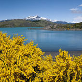 Torres del Paine - Patagonia - Chile — Stock Photo