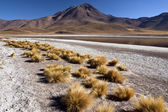Atacama Desert in Northern Chile — Stock Photo