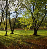 Sunlight through woodland trees — Stock Photo