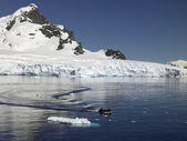 パラダイス ベイ - 南極大陸 — ストック写真