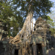 Ta Prohm - Angkor Wat - Cambodia — Stock Photo #17619877