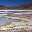 Atacama Desert in Chile — Stock Photo