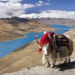 Tibet - Yamdrok Lake - Tibetan Plateau - Stock Photo