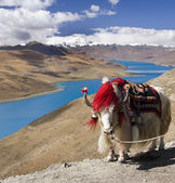 Tibet - Yamdrok Lake - Tibetan Plateau — Stock Photo