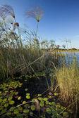 Okavango Delta - Botswana — Stock Photo