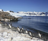Cuverville Bay - Antarctica — Stock Photo