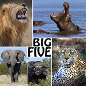 African Safari - The Big Five — Stock Photo