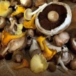 Selection of edible mushrooms - Stock Photo