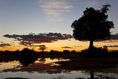 Sunset at an African waterhole — Stock Photo