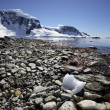 Stock Photo: Cuverville Bay - Antarctica