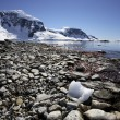 Cuverville Bay - Antarctica — Photo #18307411