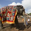 Temple Elephant - Thanjavur - India - Stock Photo