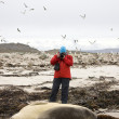 Tourist photographing seals - Falkland islands — Stock Photo