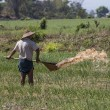 Burmese Agriculture - Myanmar — Stock Photo