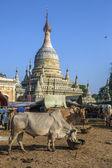 Bagan - Myanmar — Stock Photo