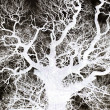 Tree Branches - Abstract — Stock Photo