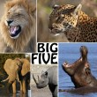 Stock Photo: AfricSafari - Big Five