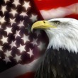 United States of Americ- Patriotism — Stock Photo #36529239